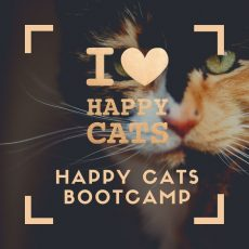Happy Cats Bootcamp